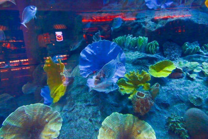 Mooie Vissen - Aquarium Doubai stock afbeelding