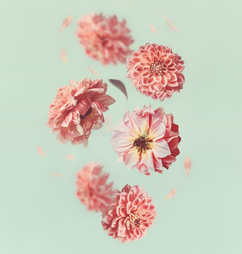 Mooie vliegende bloemen en pastelkleur roze bloemblaadjes bij lichte muntachtergrond stock foto