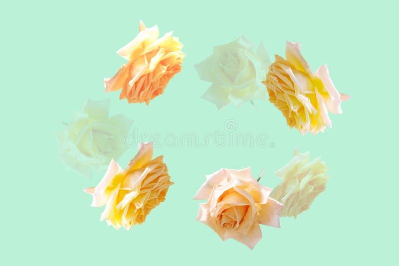 Mooie vliegende pastelkleur roze bloemen en bloemblaadjes bij lichtblauwe achtergrond, creatieve bloemen horizontale lay-out, royalty-vrije stock afbeelding