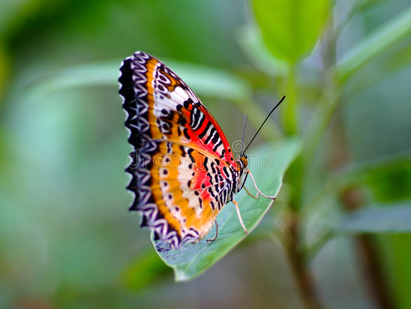 21 mooie kleurrijke vlinder - photo #21
