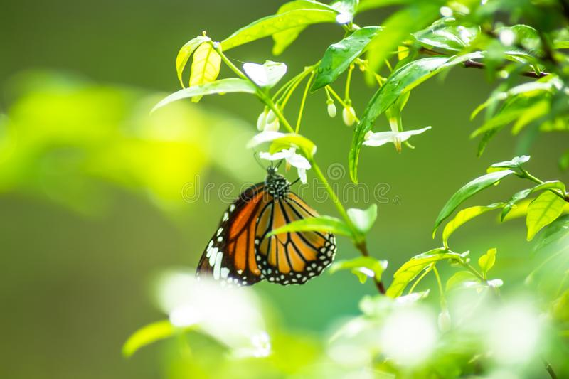 Mooie vlinder en groene bladeren in de tuin thuis stock foto