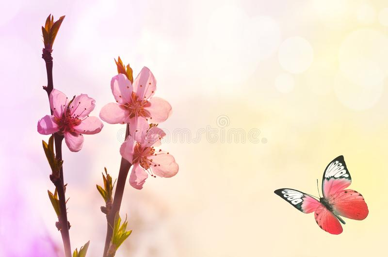 Mooie vlinder en roze bloem, gele achtergrond royalty-vrije stock fotografie