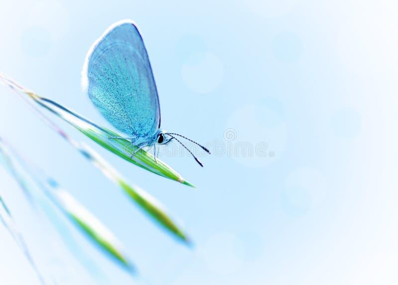 Mooie vlinder in openlucht stock foto