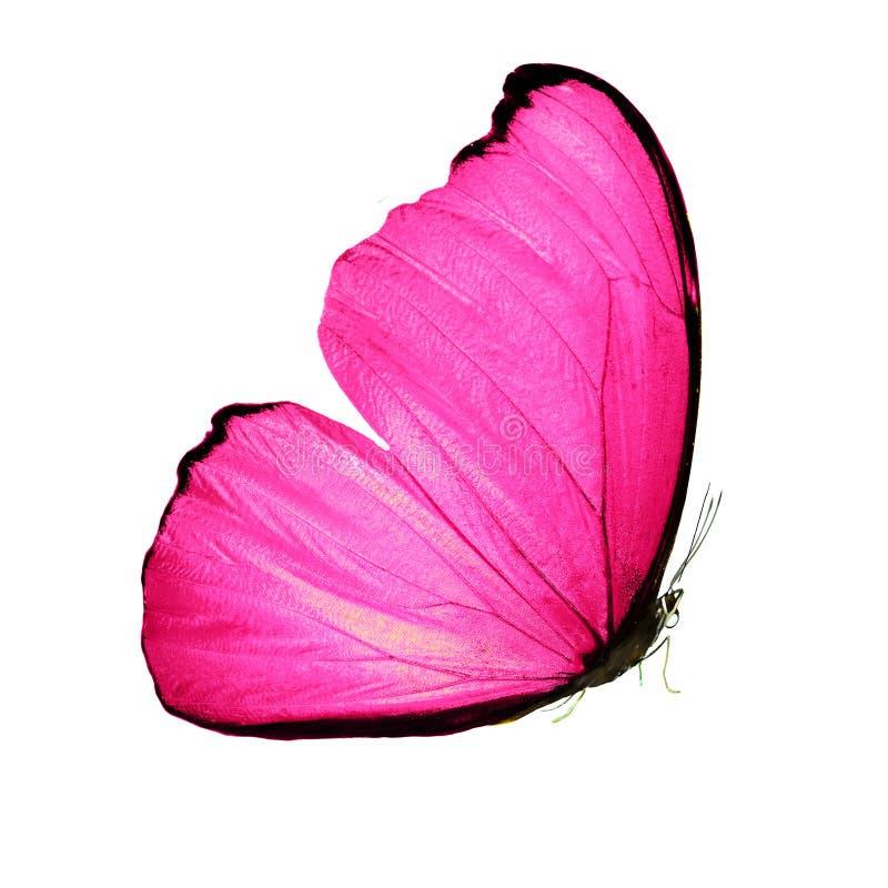 Mooie vlinder met roze vleugels en poten Geïsoleerdj op witte achtergrond royalty-vrije stock afbeeldingen