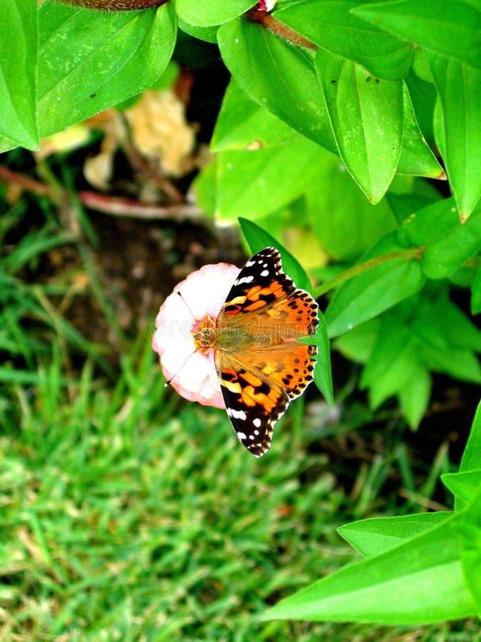 Mooie vlinder op eenzaam royalty-vrije stock afbeelding