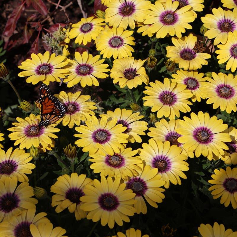 Mooie vlinderkleuren royalty-vrije stock foto