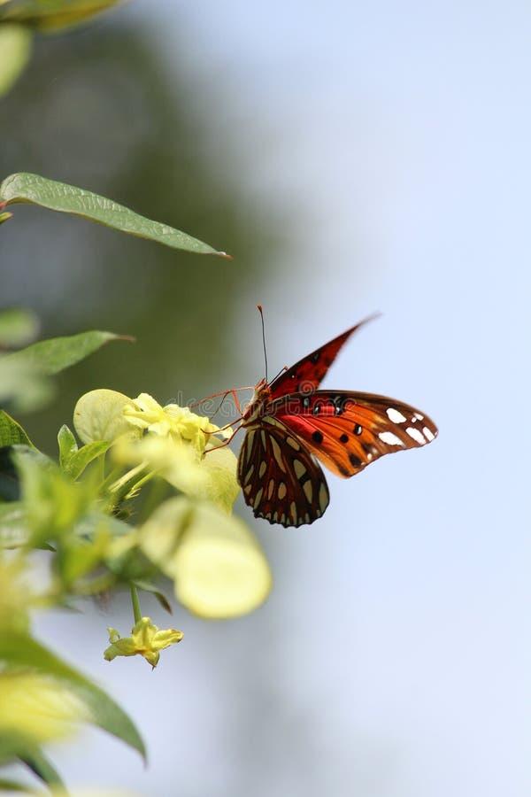 Mooie vlinderzitting op bloem in zonlicht royalty-vrije stock foto
