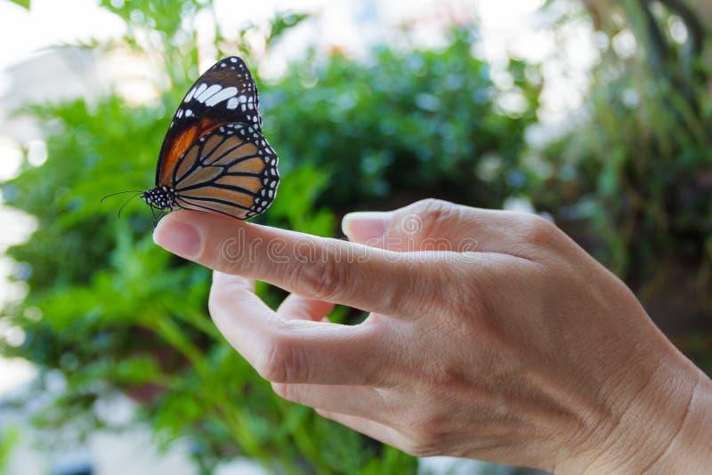 Mooie vlinderzitting op de meisjesvinger. royalty-vrije stock foto's