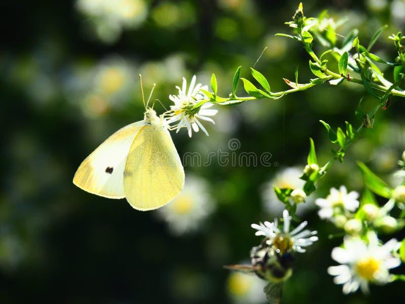 Mooie vlinderzitting op een bloem stock foto