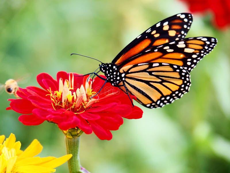 Mooie vlinderzitting op een bloem stock afbeeldingen