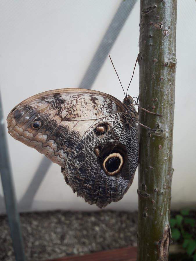 Mooie vlinderzitting op een boom stock foto's