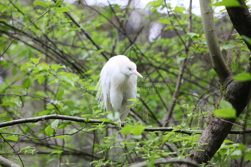 Mooie vogel royalty-vrije stock fotografie