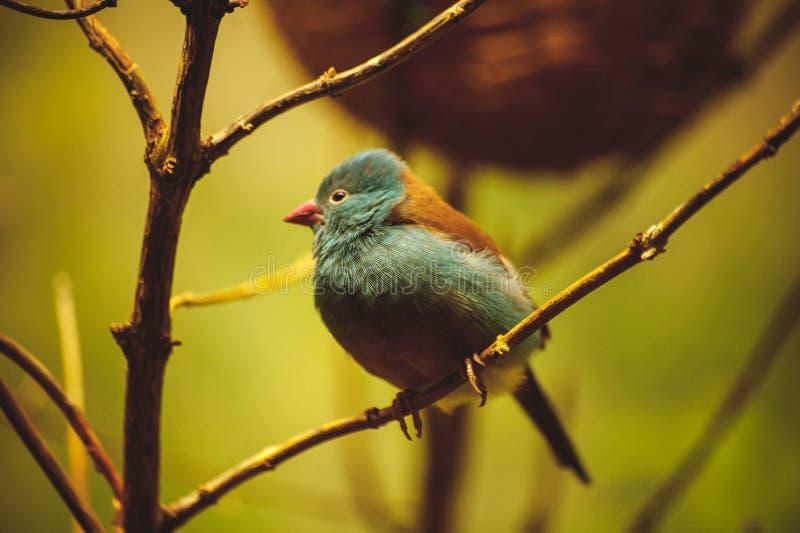 Mooie vogel die in boom situeren stock foto's