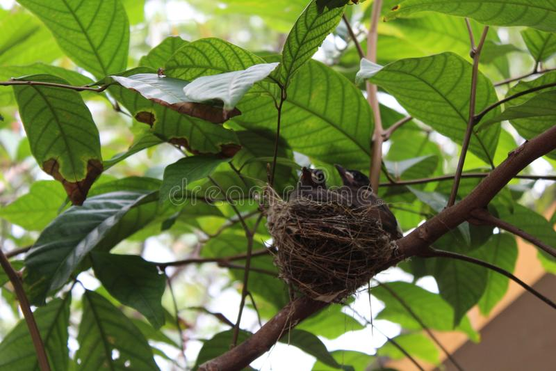 Mooie vogels stock fotografie