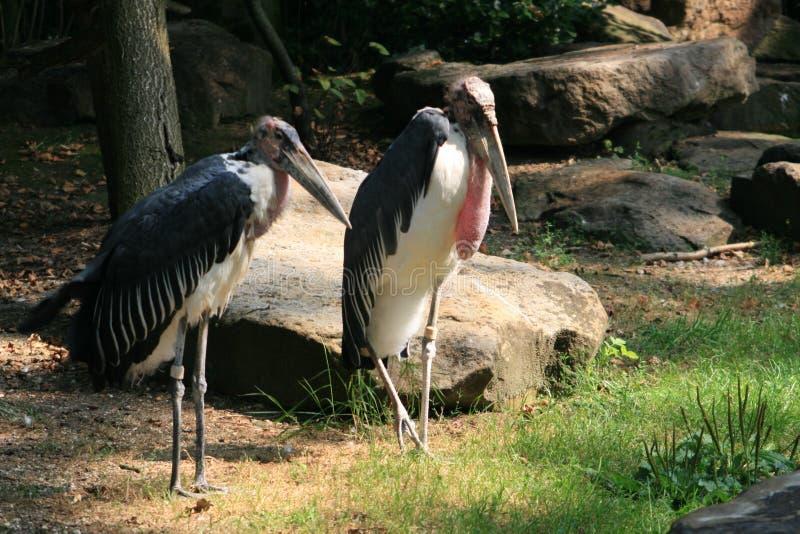 Mooie vogels in de dierentuin royalty-vrije stock foto's