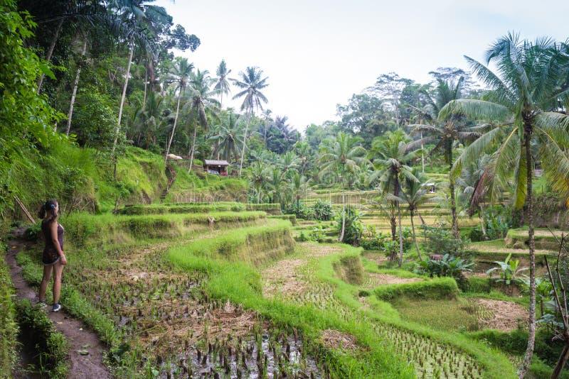 Mooie vrouw die het mooie terras van de tegallalangrijst in Bali, Indonesië bekijken stock foto