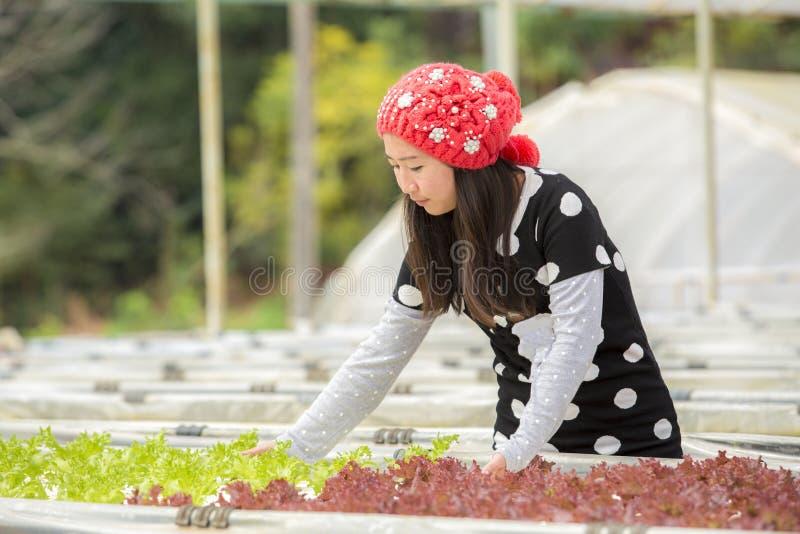Mooie vrouw die in hoed van als Organische plantaardige Serre hydroponic zomer in openlucht in Organische moestuin genieten stock afbeeldingen