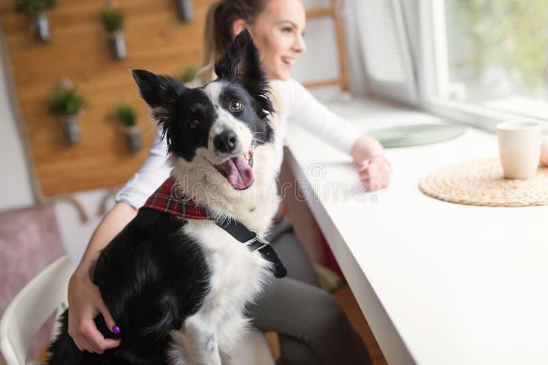 Mooie vrouw en haar beste vriend een gelukkige hond stock foto's