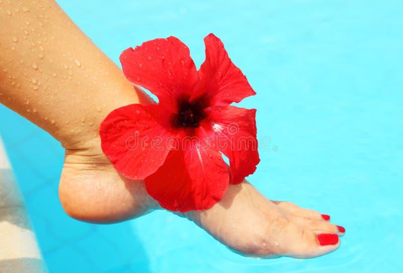 Mooie vrouwelijke benen in de pool royalty-vrije stock fotografie
