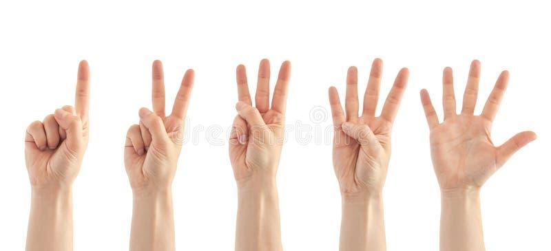 Mooie vrouwelijke handtelling van één tot gebaar vijf Geïsoleerdj op witte achtergrond stock foto
