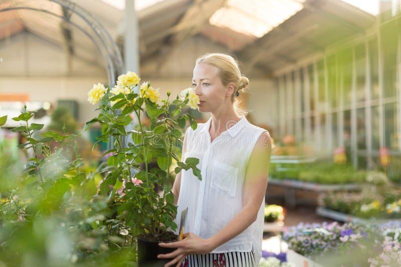 Mooie vrouwelijke klant holding en het ruiken bloeiende gele ingemaakte rozen in serre stock fotografie