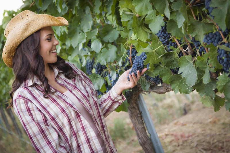 Mooie Vrouwelijke Landbouwer Inspecting Grapes in Wijngaard royalty-vrije stock afbeelding