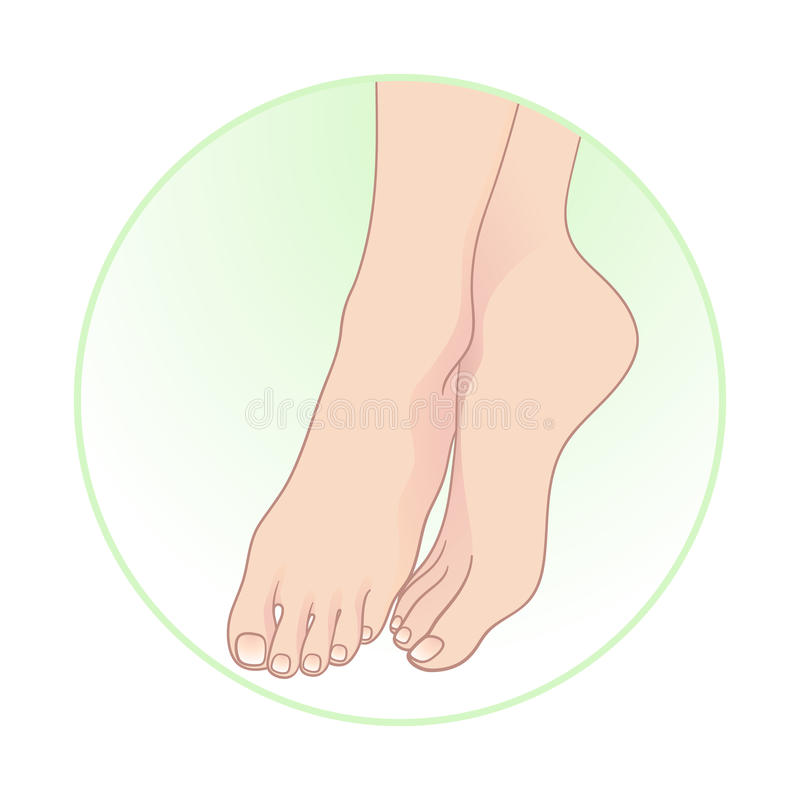 Mooie vrouwelijke voeten Lichaamsverzorging vectorillustratie royalty-vrije illustratie