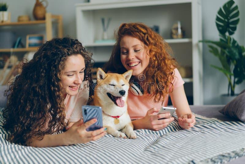 Mooie vrouwen gebruikend smartphones en strelend hond die op bed liggen royalty-vrije stock foto