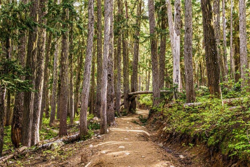 mooie wandelingssleep met lange bomen in garibaldi provinciaal park Canada royalty-vrije stock foto's
