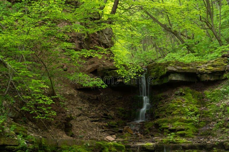 Mooie waterval in de lente bos Karpatisch, de Oekraïne royalty-vrije stock fotografie