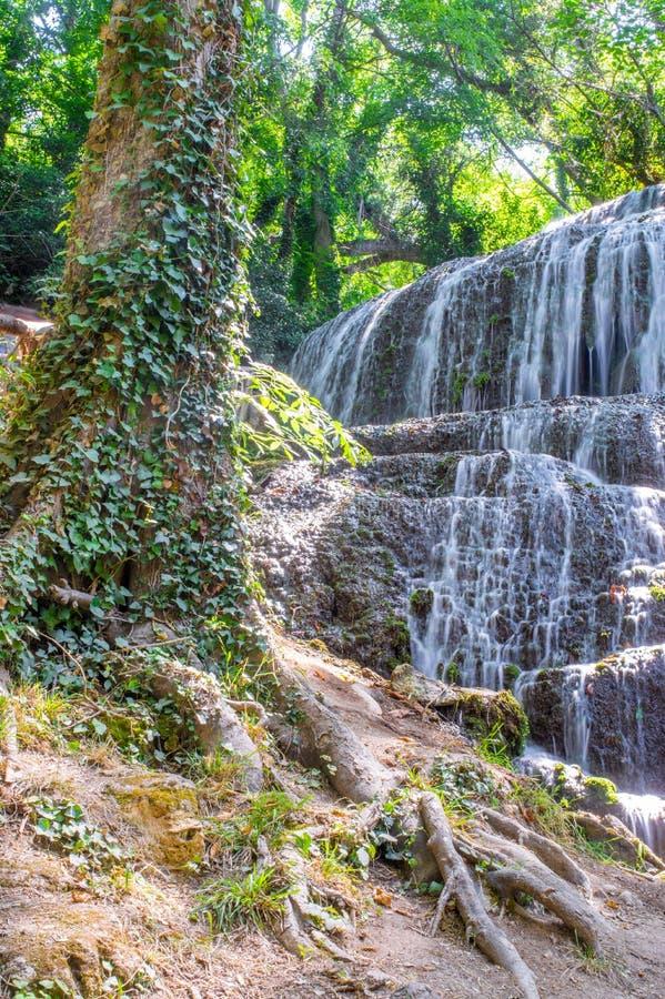 Mooie waterval en een oude boom stock foto