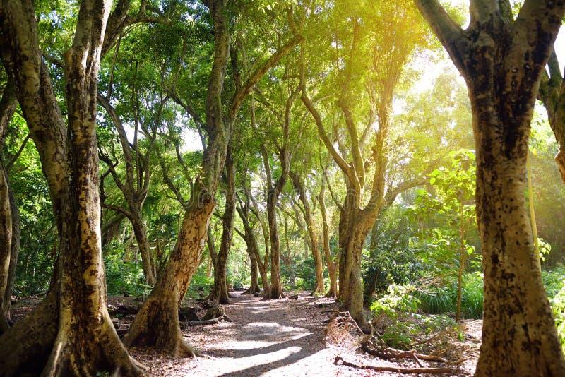 Mooie weg door tropisch regenwoud die tot Honolua-Baaistrand leiden, Maui, Hawaï royalty-vrije stock afbeeldingen