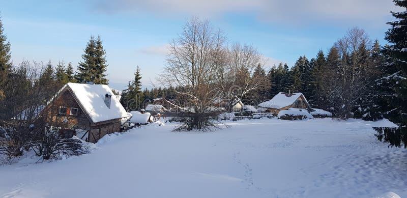 Mooie whit van de de winterscène sneeuw en bomen stock afbeelding