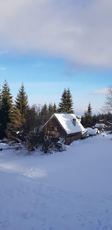 Mooie whit van de de winterscène sneeuw en bomen royalty-vrije stock foto's
