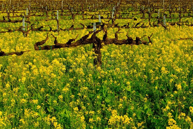 Mooie Wijngaard stock afbeelding