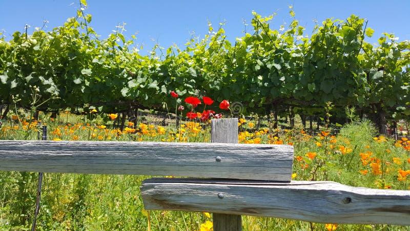Mooie wijngaard royalty-vrije stock foto