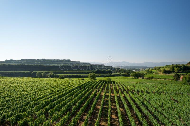 Mooie Wijngaardterrassen in Ihringen, Zuid-Duitsland stock fotografie