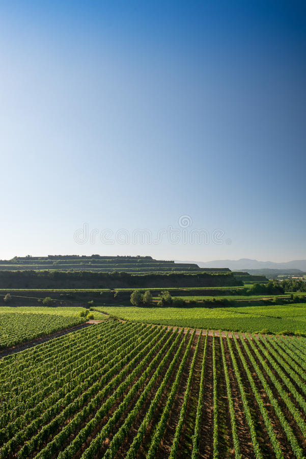 Mooie Wijngaardterrassen in Ihringen, Zuid-Duitsland royalty-vrije stock foto's