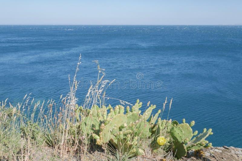 Mooie wilde cactus met blauwe overzeese achtergrond stock foto's