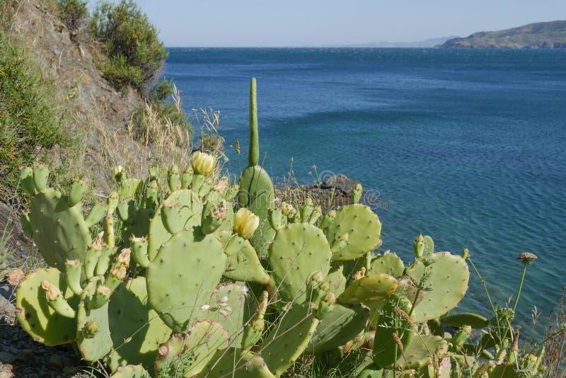 Mooie wilde cactus met blauwe overzeese achtergrond stock foto