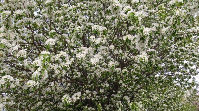 Mooie witte bloei stock fotografie