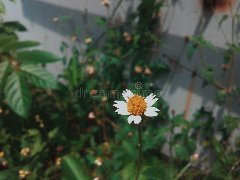 Mooie Witte Bloem royalty-vrije stock afbeeldingen
