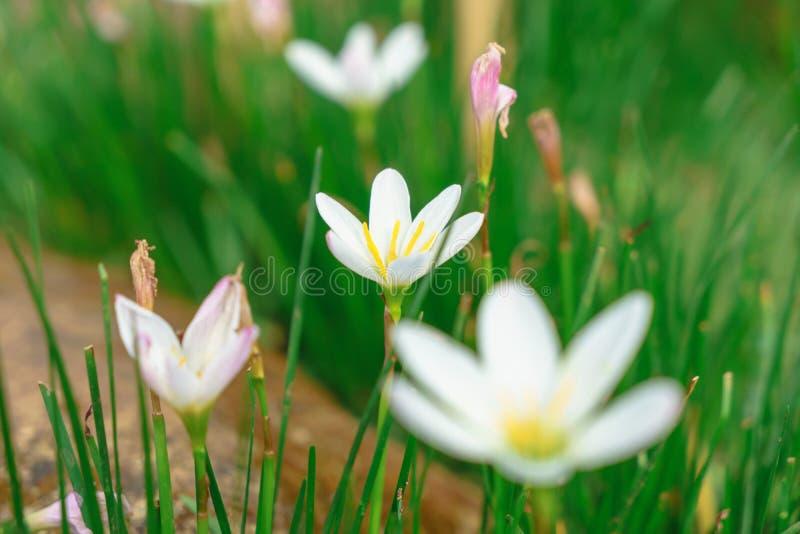 Mooie witte bloemen met groene boomstam als achtergrond bij Mo stock foto