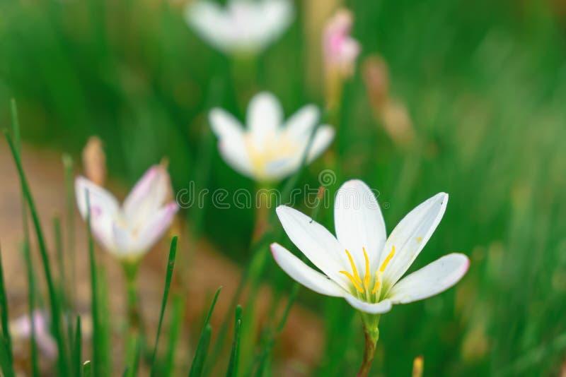Mooie witte bloemen met groene boomstam als achtergrond bij Mo royalty-vrije stock foto