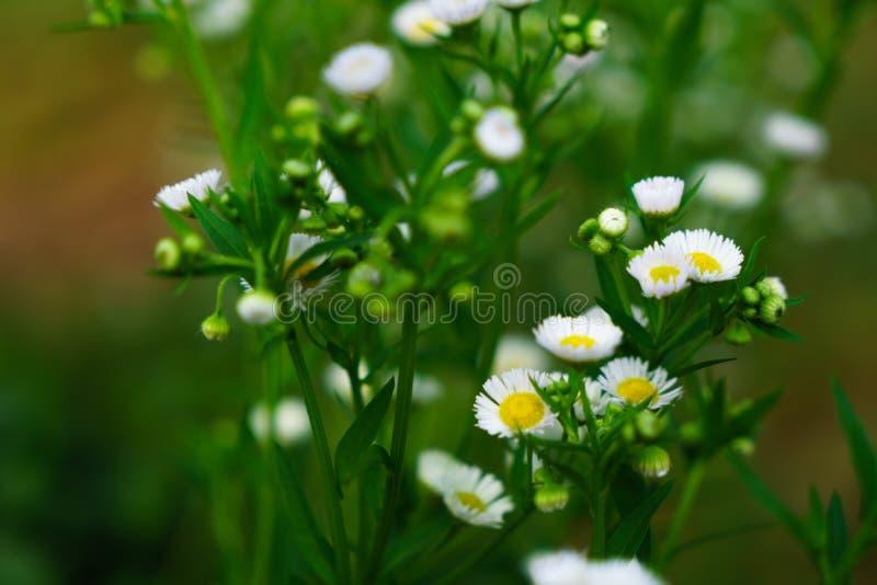 Mooie witte bloemen met groene boomstam als achtergrond bij Mo stock afbeeldingen