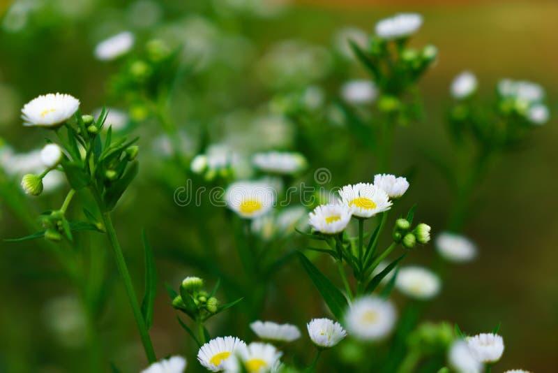 Mooie witte bloemen met groene boomstam als achtergrond bij Mo stock fotografie