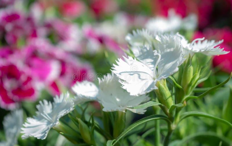 Mooie witte bloemen stock foto's