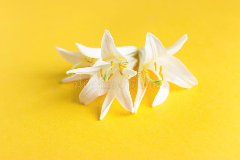 Mooie witte Leliebloemen op gele achtergrond royalty-vrije stock fotografie