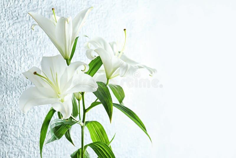 Mooie witte lelies royalty-vrije stock afbeelding