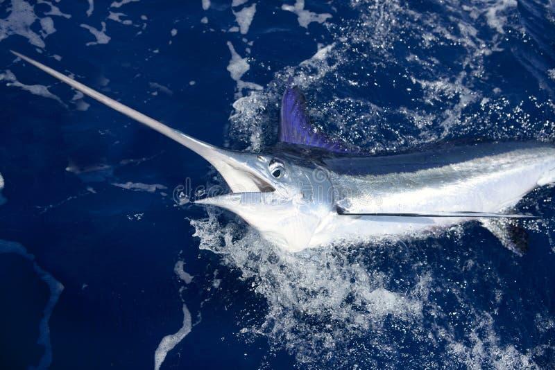 Mooie witte marlijn echte billfish sport visserij stock afbeelding